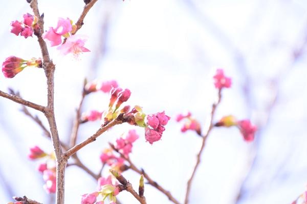 赤坂泉公園 陽光.jpg