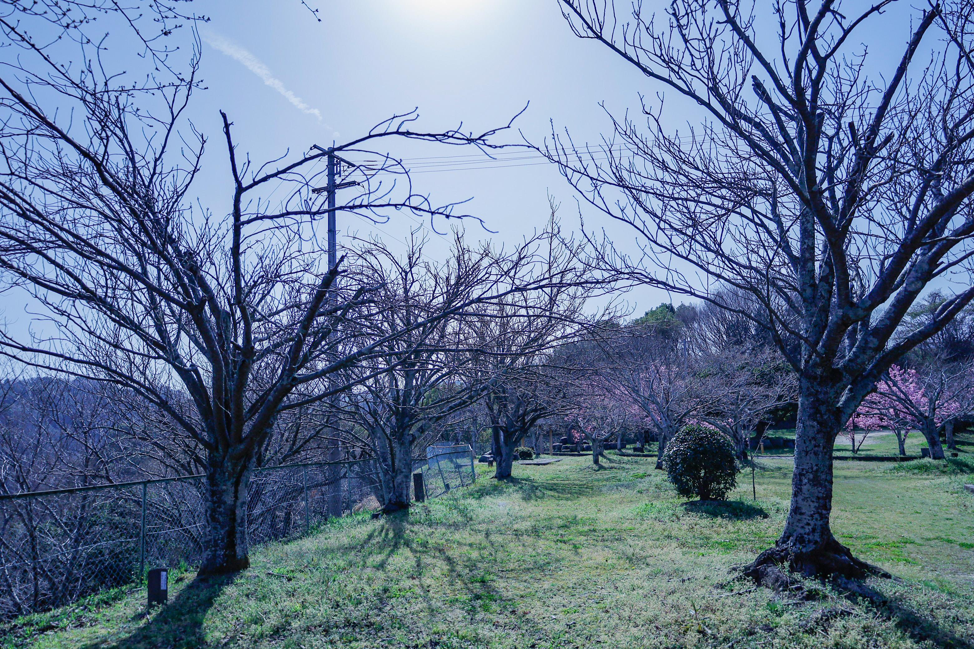 金毘羅山公園.JPG